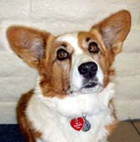 inca-therapy-dog-blog.jpg