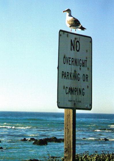 gull-says-no-parking-blog.jpg