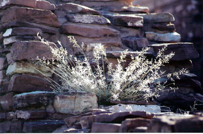 winter-grass-in-chaco-wall-blog.jpg
