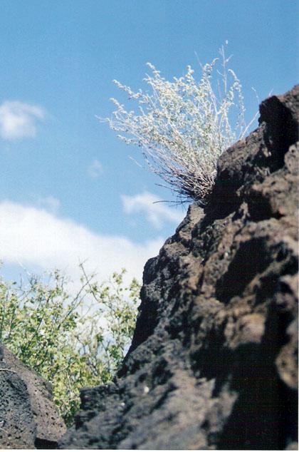 valley-of-fires-cliffhanger-blog.jpg