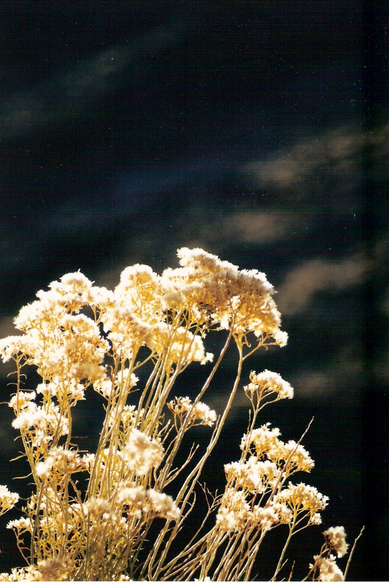 weeds-can-be-dramatic-too0001.jpg