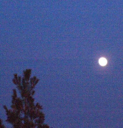 moonrise-12-11-08.jpg