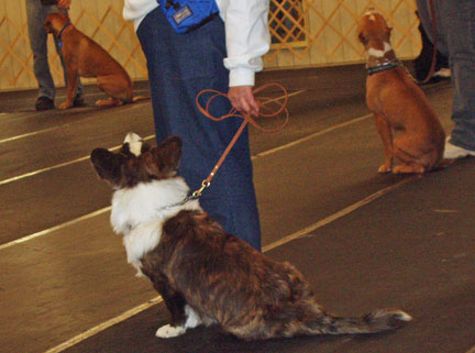 obedience-class2-1-10-09.jpg