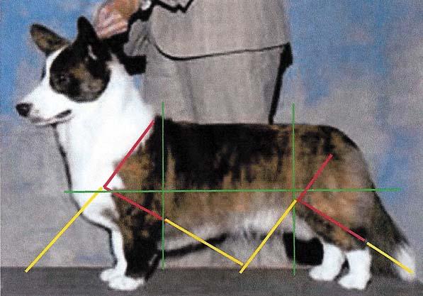 chase-angles.jpg