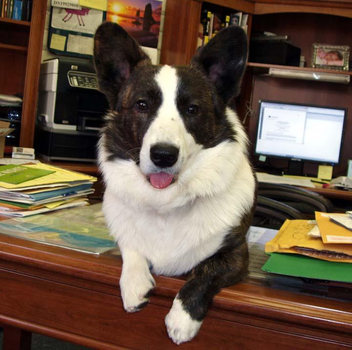 chase-office-desk-2-19-09.jpg