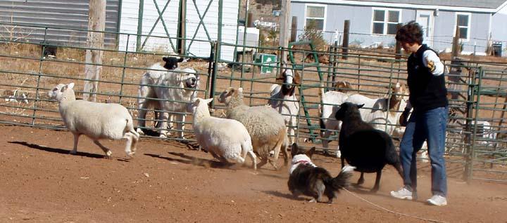 sheep-are-more-fun-3-1-09.JPG