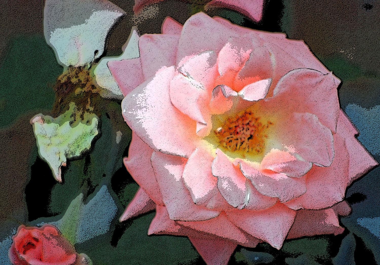 blown-rose-w-poster-edge-5-25-09.jpg