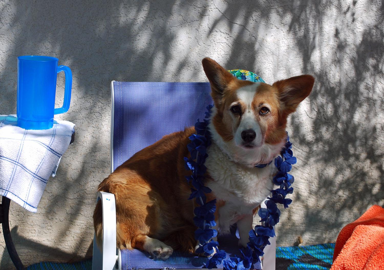 inca-7th-birthday-at-the-pool1-5-26-09.jpg