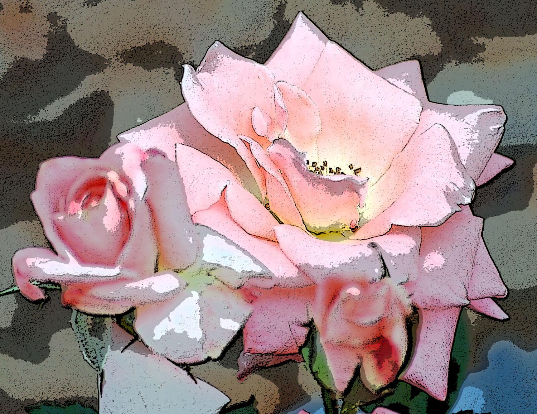 rose-buds-w-poster-edge-5-25-09.jpg