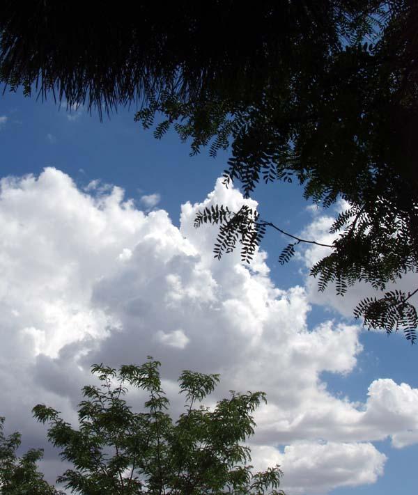 clouds-through-mimosa-6-24-09.JPG