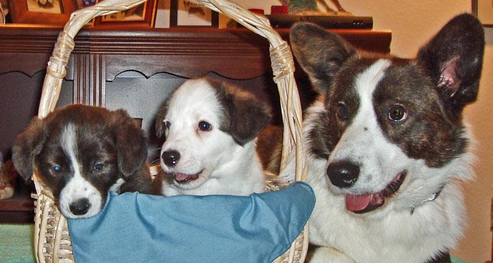 Little Family 10-31-09