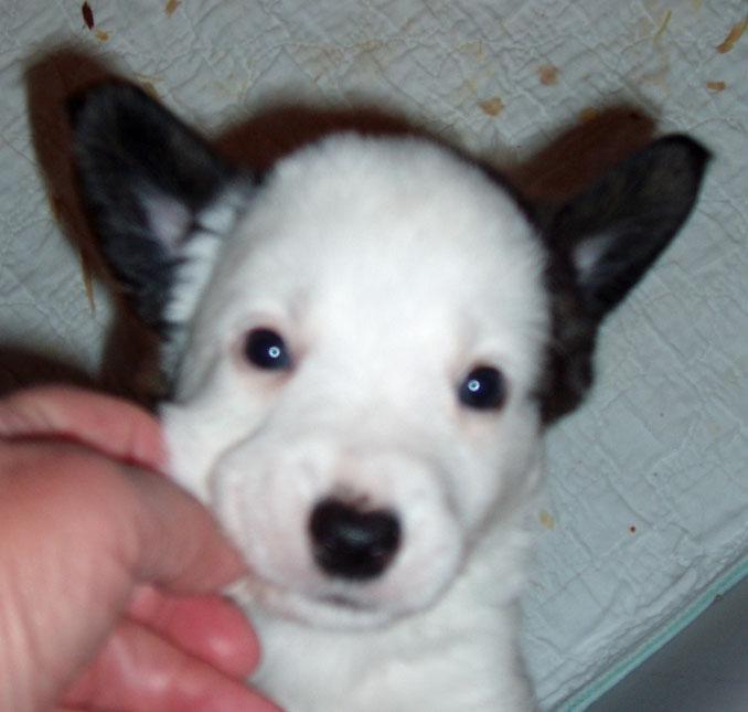 Watson ears 10-22-09