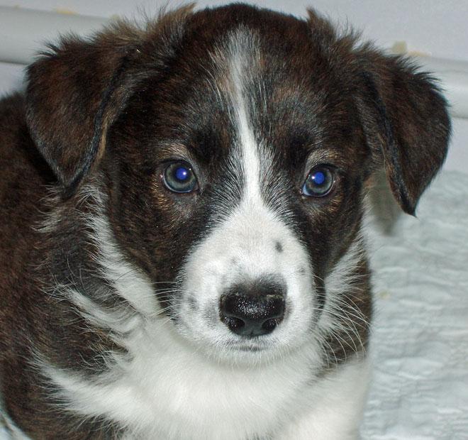 Cute Face Holmes 11-7-09