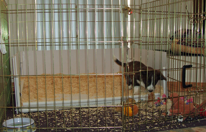 New Puppy Pen 11-25-09