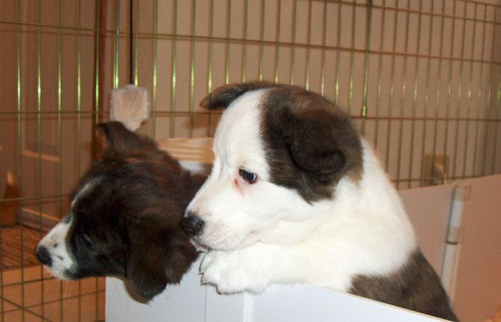Same cute puppies