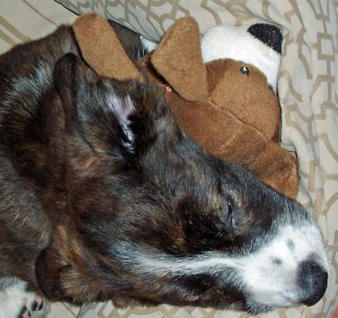 Sleeping w toy blog 11-28-09
