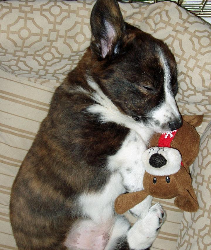 Twas the night before Christmas blog 11-28-09