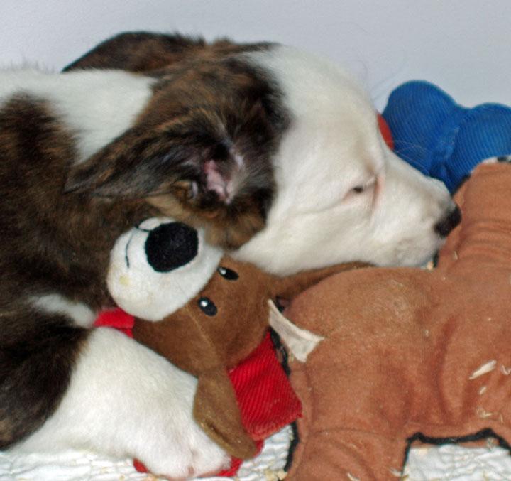 Watson Gathered toys 11-16-09