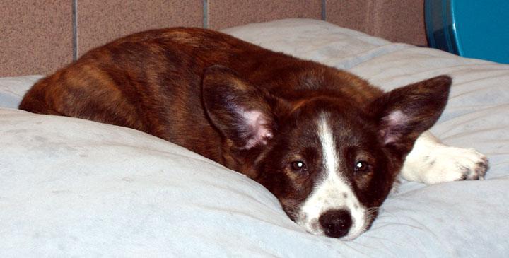 Big Puppy Cushion 12-18-09