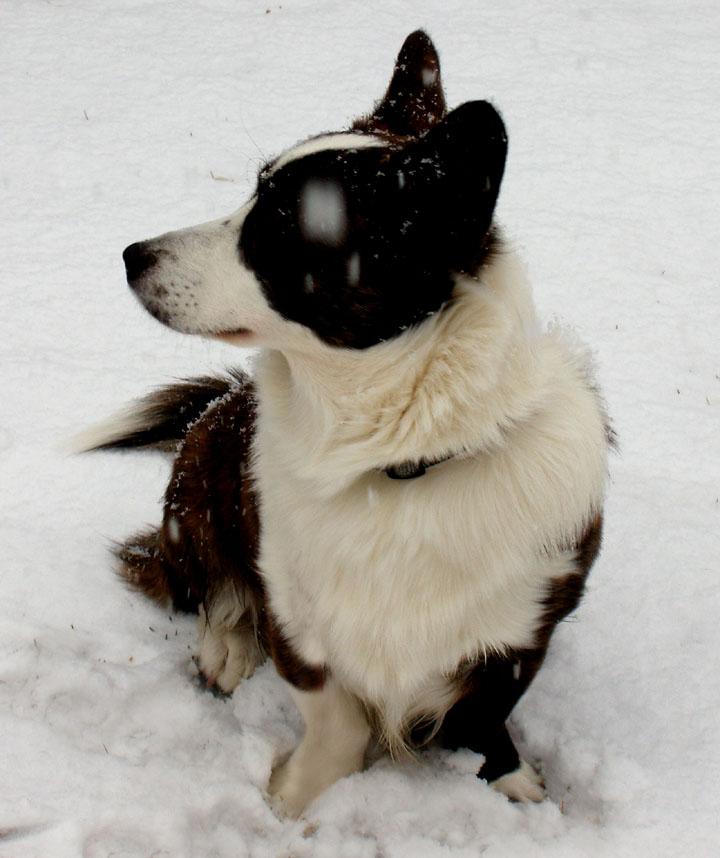 Let it snow 12-23-09