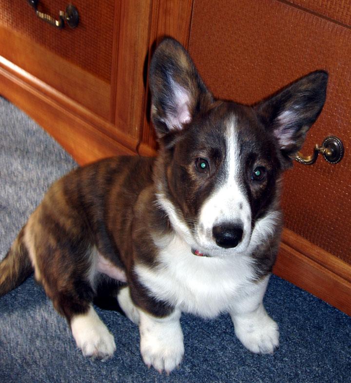 Office Puppy 12-18-09