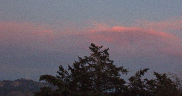 trees w pink clouds 12-1-09