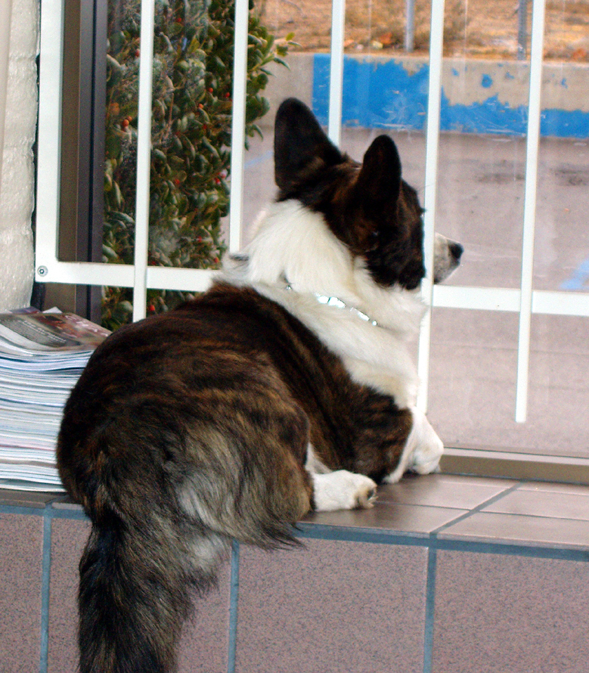 Watch Dog 1-14-2010