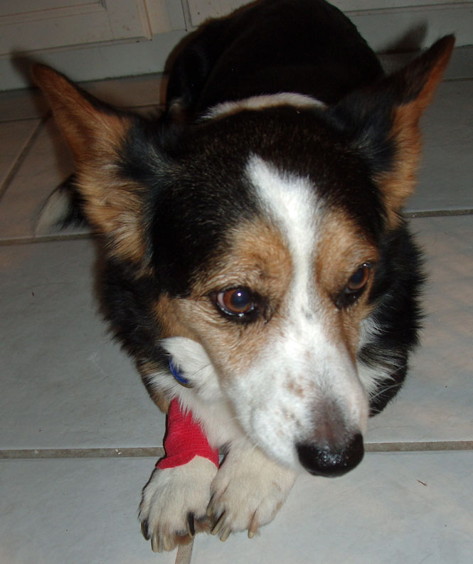 Phoebe post surgery 2-9-2010