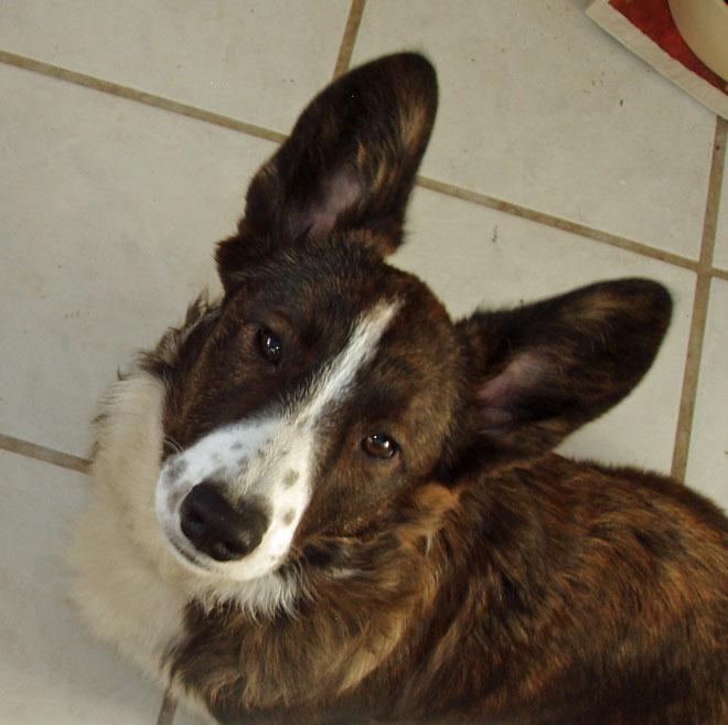 Puppy ears 2-15-2010