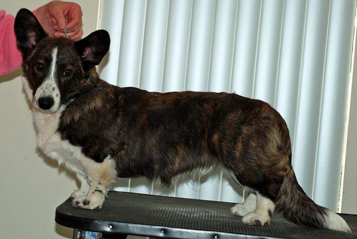 Holmes Looks Like Dad 3-6-2010