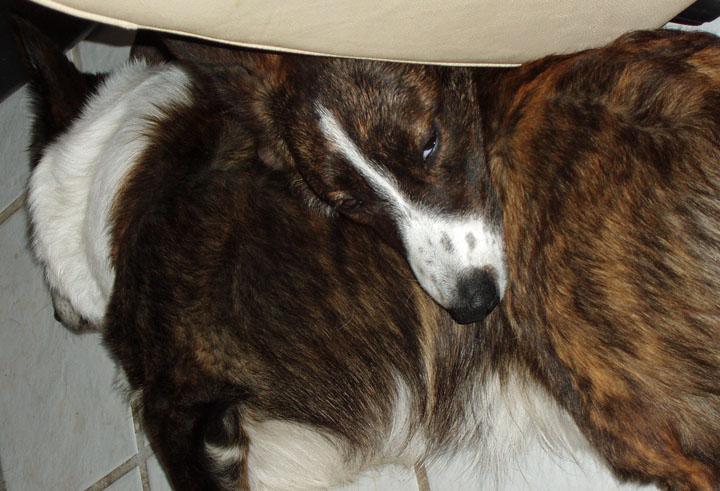 Sleeping on Dad 3-22-2010