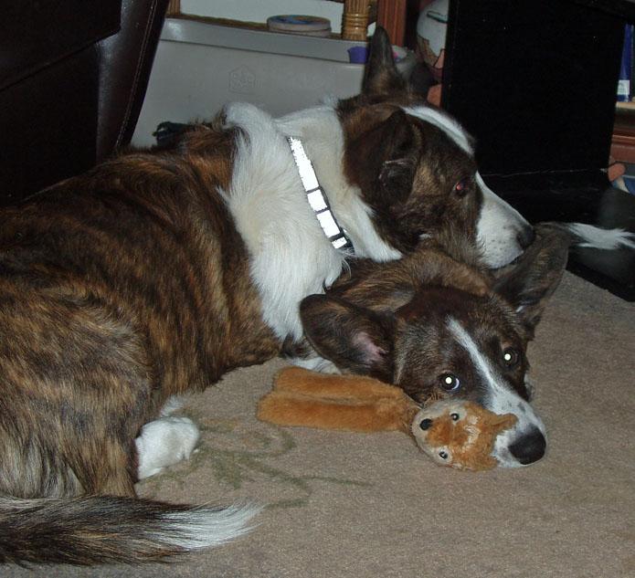 puppy pillow 2-28-2010