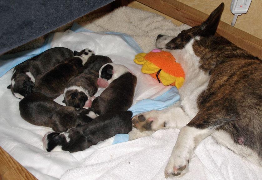 Having Babies is Tiring 4-17-2010