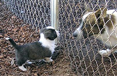 Chase meets Digger blog