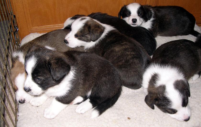 Puppy pile 5-19-2010