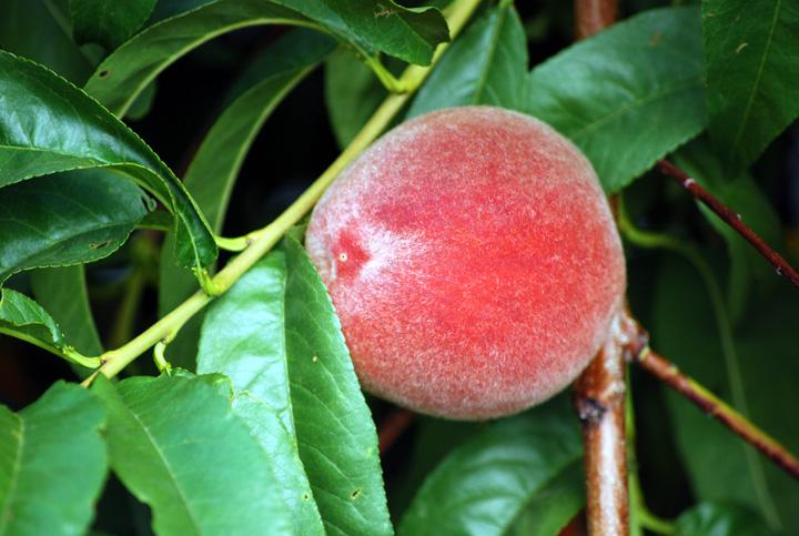 Almost ripe 7-7-2010