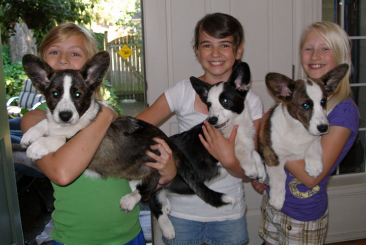 M-C puppies with friends 7-22-2010