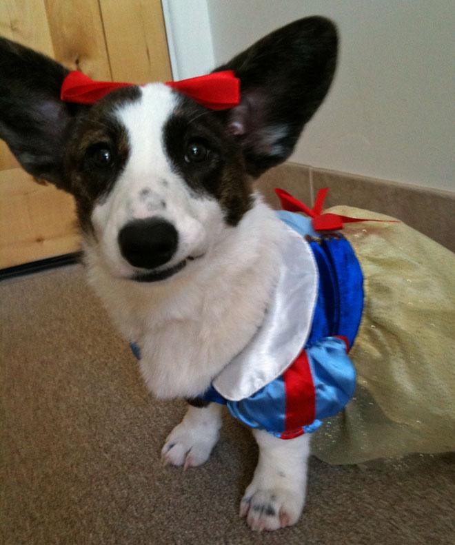 Darby in costume 8-23-2010