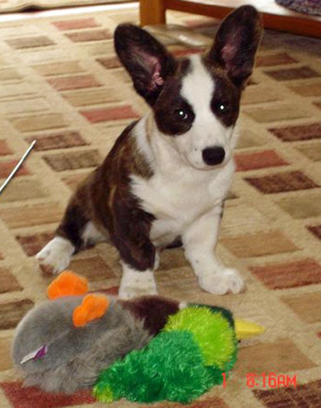 Finn w goose toy 8-1-2010