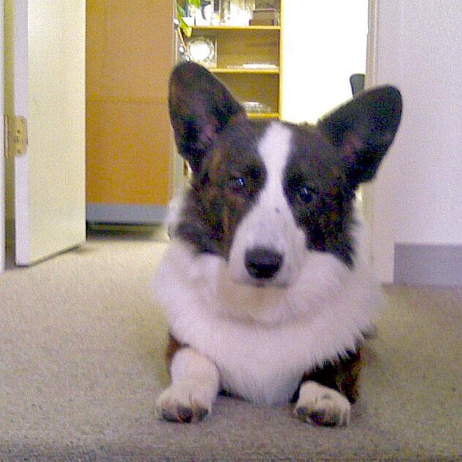 Handsome Gargoyle 8-27-2010