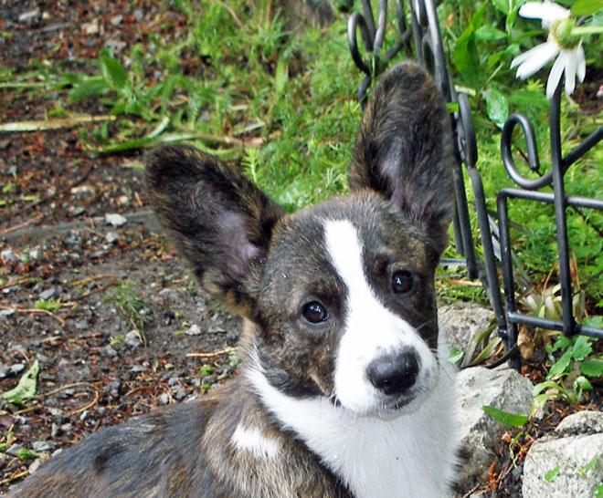 Rosie face 8-8-2010