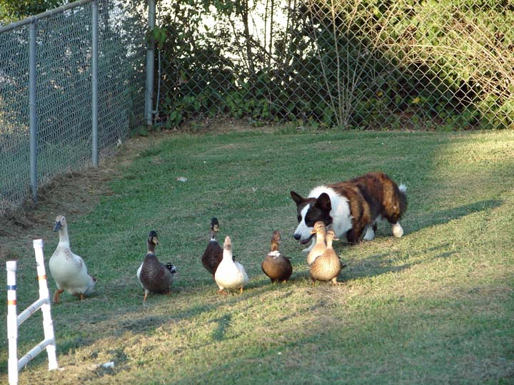 Get Along Lil Duckies blog 9-24-2010
