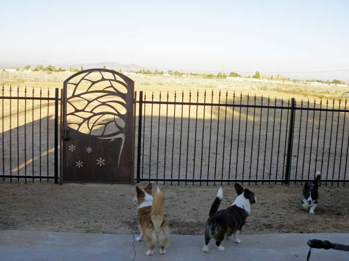 Gates up - dogs in jail 10-7-2010