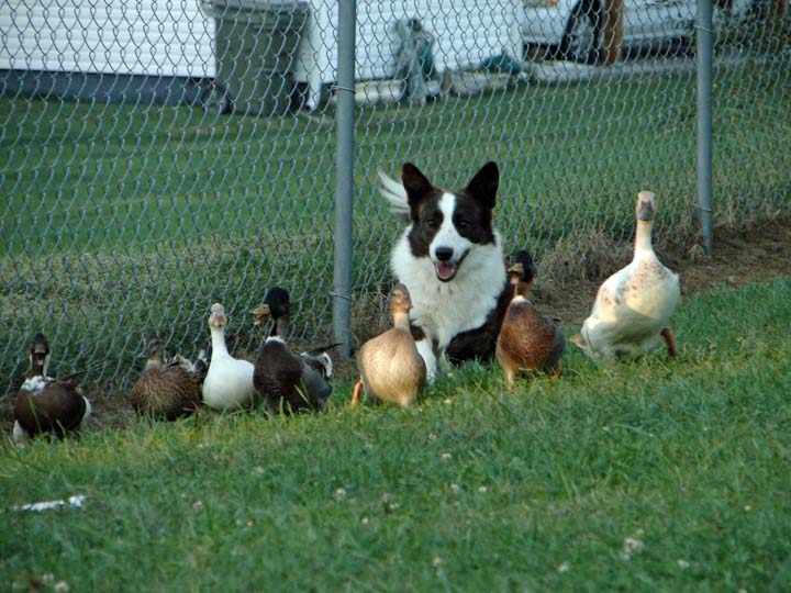 My Flock blog 10-1-2010
