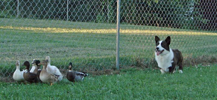Organized Ducks Are Worth a Smile blog 10-1-2010