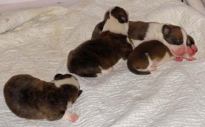 Puppy Pile - 10-26-2010