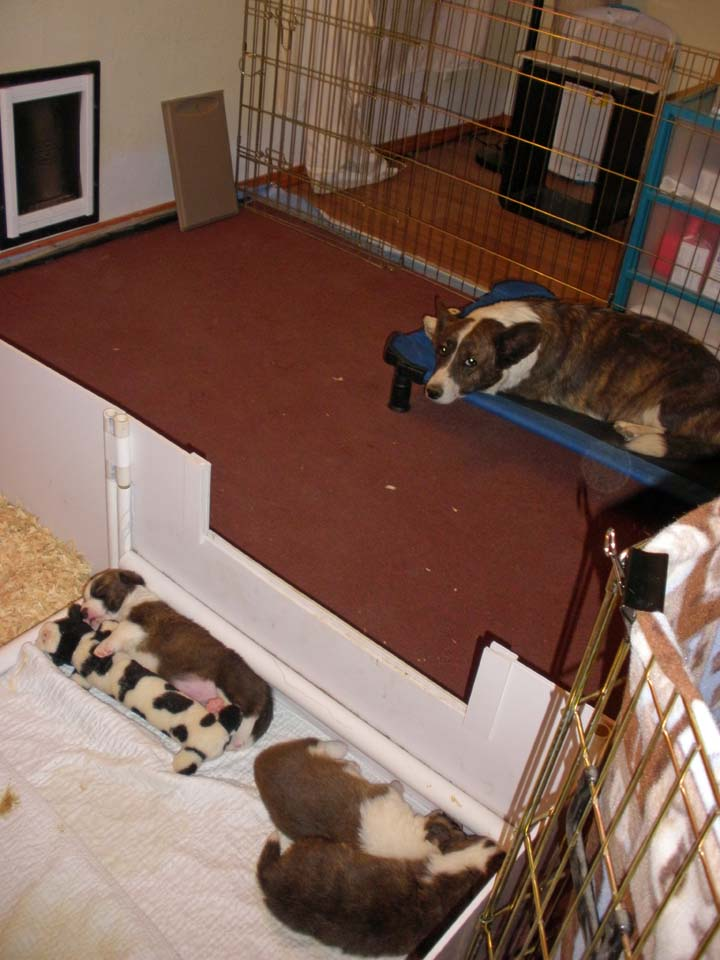 Reconfigured puppy space 11-11-2010
