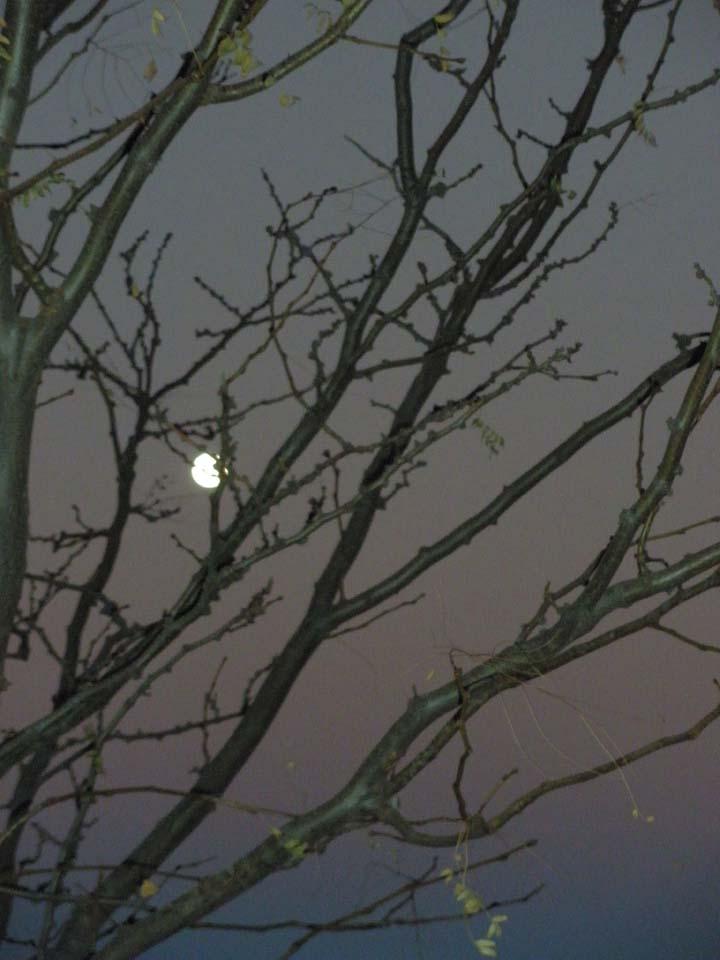 moonrise2 11-22-2010