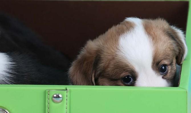 Copper peeking - blog 4-30-13