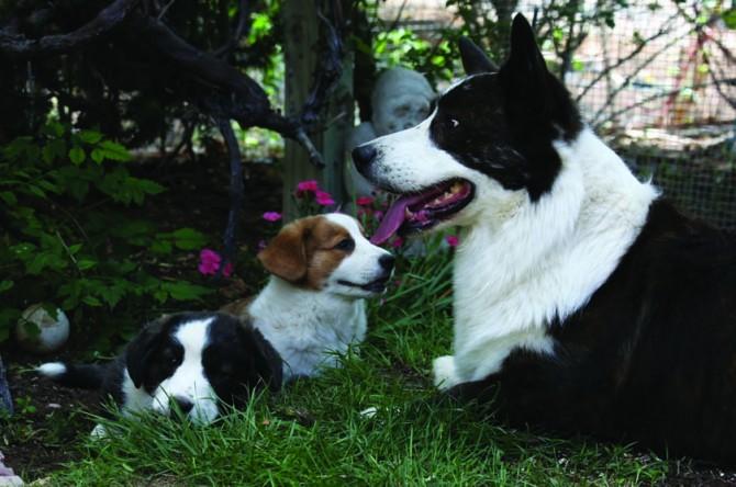 Special Dog 2 blog